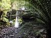 Russell Falls (AdamsWife) Tags: australia tasmania mtfieldnationalpark nationalpark water waterfall plants rainforest wilderness