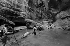 Narrows Crossing B&W (mteckes) Tags: nikon d800e bw blackandwhite utah zionnationalpark nationalpark narrows america usa hiking nature river virginriver desert