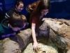 2018_03_SeaLife06 (GrazerX) Tags: sealife lochlomond aquarium fish scotland graemesimpson samsung galaxy s9 s9plus