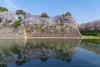 名古屋城外濠 / Nagoya Castle's outer moat (kimtetsu) Tags: 名古屋 nagoya 城 名古屋城 castle nagoyacastle 桜 cherryblossom water 反射 reflection 春 spring 日本 japan