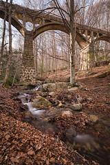 bridge in the forest (ipellisa) Tags: pont puente bridge bosc bosque forest aigua agua water rierol riachuelo creek roques rocas rocks arbres arboles trees hivern invierno winter montseny nikon d500 tokina 1116mm