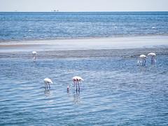 Zen (Melvinia_) Tags: olympusomdem1 namibia namibie walvisbay ocean océan atlantic atlantique flamingo flamantrose blue bleu empty landscape seascape africa afrique