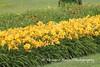 Benton Daylilly Farm (66) (Framemaker 2014) Tags: benton daylily farm garden flowers columbia county pennsylvania endless mountains united states america