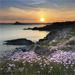 Sea Thrift, West Cornwall (Sue Sayer) Tags: pink orange sunset mount stmichael tidal cliffs evening atlantic ocean