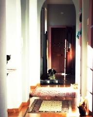 sentinelle (me, paolo and the seven wonders + two&little3) Tags: gatte bengale europea fencing jasmine zohra soraya cane chien perro hunde kutya dog sanbernardo sanbernard