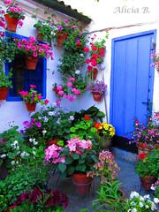 Patio Cordobés II (Alicia B,) Tags: patio court córdoba flores andalucía spain españa