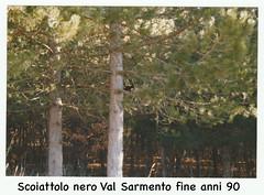 Scoiattolo nero fotografato in Basilicata anni 90