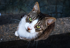 2018_111 (Chilanga Cement) Tags: fuji fujix100f fujifilm colour color cat x100f xseries fujix kit kitty ears whiskers whisker wall feline cats paws paw tail looking