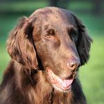 Happy, Happy 11th Birthday, Tilly! thumbnail