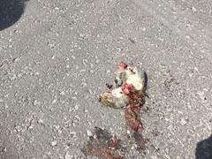 road kill1 (bloomspix) Tags: walknow somerset avalon artist walk