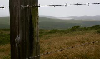 California pastureland