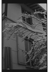 P59-2018-014 (lianefinch) Tags: argentique argentic analogique analog blackandwhite blackwhite bw noirblanc noiretblanc nb monochrome neige snow arbre tree jardin garden outdoor extérieur house maison