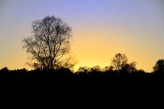 Sunset, Cannock Chase 29/01/2018 (Gary S. Crutchley) Tags: cannock chase evening uk great britain england united kingdom staffordshire staffs west midlands westmidlands nikon d800 forest heath heathland january raw