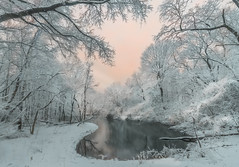 Whiteland 白域 (kaising_fung) Tags: winter beauty trees forest woods d850 zeiss 1528 snow white quiet silence distagon