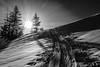 marbachhoehe (bernd.kranabetter) Tags: skitourdientenamhochkönig winter grünkögerl marbachhöhe nature mountain sunrise backcontryskiing tress snow cold blackwhite