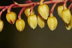 _DSC8661w18u Lavendelheide (wdeck) Tags: garten meingarten dsc8661w18u lavendelheide