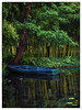 August in Giverny (Laura Drury) Tags: yellow giverny claudemonet monet garden bamboo reflections boat blue tree lake france artist