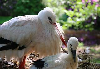 In the stork nest