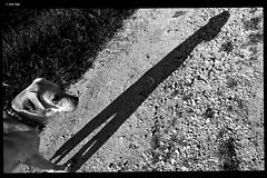WP_20180422_08_16_17 (anto-logic) Tags: ombre luce luminoso caldo warm passeggiata walking country campagna erba grass chiaro bello cani dogs labrador amici friends free freedom sun shadows fence light clear daily ombra shadow nice beautiful lovely pretty bn bw blackandwhite biancoenero love outdoor streetshots inquadratura wonderful fabulous magnificent superb naturallight skin lighting framing crop charming puntodivista profonditàdicampo pov dof bokeh focus pointofview depthoffield postproduzione postproduction lightroom filtro filter effetti effects photoshop alienskin microsoft lumia950