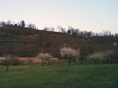 Vineyard over Lispida Castle (Monselice, Padua)
