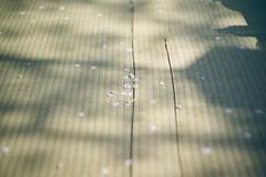 Spring Light (ryo_ro) Tags: a7 ilce7 sony jupiter lomo lomography zenit 50mm f15