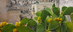 matera green (poludziber1) Tags: street streetphotography skyline summer city colorful cityscape color colorfull italia italy matera green nature travel