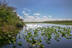 IMG_8270 (trish4pics2000) Tags: everglades glades florida heat sun swamp excursion sightseeing water lookingforcrocodiles