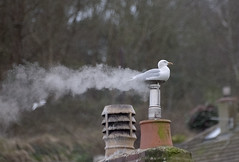Seagull sauna (jonathan charles photo) Tags: seagull sauna warm cold winter chimney steam cornwall gorranhaven art photo jonathan charles