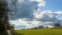 Clouds (bLiCk-WiNkL) Tags: deutschland germany clouds wolken sky himmel wiese natur nature nrw tree trees baum bäume landscape landschaft menschenleer weg way
