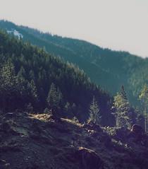 Happy little trees (wichrzu_wichrzu) Tags: mountains trees forest tatry zakopane spring