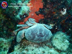 """Crab - Kalymnos Diving • <a style=""""font-size:0.8em;"""" href=""""http://www.flickr.com/photos/150652762@N02/40471872720/"""" target=""""_blank"""">View on Flickr</a>"""