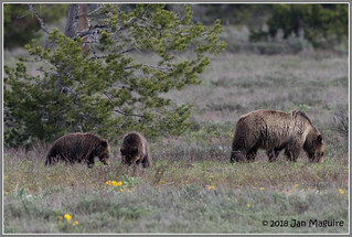 Grizzly Family 0056