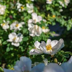 DSC03546-Lr (slam.photo) Tags: paris spring printemps