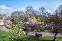 Perfect Day (cuppyuppycake) Tags: spring london uk england cherry blossoms nature outdoors path st james park bench