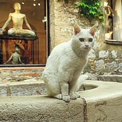 El Gato (nuska2008) Tags: nuska2008 nanebotas cat tiendadeantigüedades escaparates gordes laprovenza francia gatoblanco olympussz30mr
