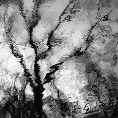 Trees In Water 130 (noahbw) Tags: captaindanielwrightwoods d5000 desplainesriver dof nikon abstract blackwhite blackandwhite blur branches bw depthoffield distortion forest monochrome natural noahbw reflection ripples river silhouette spring square trees water woods