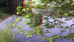 Valkenberg Breda 3D (wim hoppenbrouwers) Tags: valkenberg breda 3d anaglyph stereo redcyan allfreepicturesmay2018challenge park bomen water reflectie reflection visualart spiegeling gracht