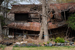 falling down (kasa51) Tags: house building wooden decay ruined falldown gekkoji yamanashi japan 月江寺 廃屋 倒壊 abandoned tree weed トタン屋根