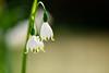 Spring flowers (cosovan vadim) Tags: flower nature macro white bokeh nikon d750 tamron 70200mm f28 spring