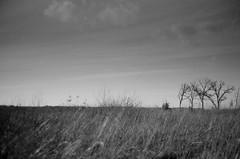 (lostinblue) Tags: fujicav2 35mm ilford wisconsin delta 100 rangefinder film grain