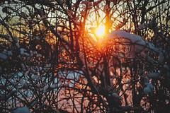 #186 - Winter sunset #3 / Zimní západovka #3 (photo.by.DK) Tags: winter wintersunset wintermood winterabstract sunset sunshine bokeh bokehlicious beyondbokeh wideopen shotwideopen wideopenbokeh oldlens legacylens manuallens manualfocus manual manualondigital vintage vintagelens pancolarauto5018mc pancolar pancolar50 pancolarauto pancolarauto50 pancolar5018 carlzeiss carlzeissjena carlzeisspancolar zeiss zeisslens czj czjpancolar germanlens sonya7 sonyilce sony sonya7ii sonyalpha artbydk photobydk