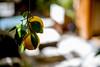 Fruitful (mripp) Tags: art vintage retro old orange oranges fruit fruits fruchte fünfamtag healthy eating gesund gesundheit ernährung diät diet leica m10 summilux 50mm marrakech africa afrika marokko