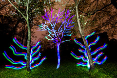Trees are Blooming - Spring is Here (Stimulight the Night) Tags: lightpainting lightart lightpaintingphotography lightartphotography lightpaint lightpainters slowshutter longexposure longexposurephotography nightphotography lightingthenight stimulightthenight lightstencil lightstencilphotography lightstreams spring 2018 trees tree