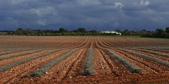 Les chenilles grises (YvainB) Tags: plateaudevalensole verdon alpesdehauteprovence