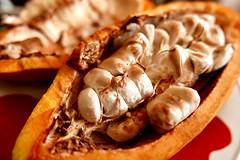 cacao  fruit (DOLCEVITALUX) Tags: cacao cacaofruit lumixlx100 panasoniclumixlx100 philippines fruit fruits plant chocolatefruit