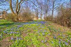 Neubrandenburg - Wall (www.nbfotos.de) Tags: neubrandenburg wall frühling spring frühlingsblüher blumen flower blau blue mecklenburgvorpommern