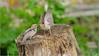 LR7-PGH55413 (JB89100) Tags: 2018 6kphotomode effetsspeciaux moineau oiseaux quoi