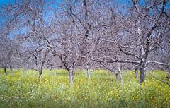 PTX_P3_FUJI_SUP_200_018-Edit.jpg (RoadSideFoto) Tags: california 50mm pentax superia fuji filmisnotdead 200 redding p3 analog film