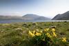 Ennerdale Water (Pexpix) Tags: copelanddistrict england unitedkingdom gb lake water flowers bee ennerdalevalley spring 攝影發燒友