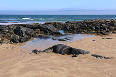 Rocks,St Combs Beach_may 18_640 (Alan Longmuir.) Tags: rocks stcombsbeach grampian aberdeenshire stcombs